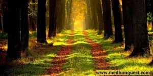 beautiful scene in forest