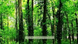 the importance of forest and trees